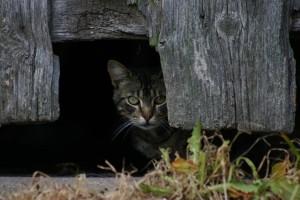eine Katze hat sich versteckt