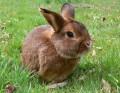 kleines Kaninchen auf einer Wiese