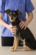ein Hund bei einem Tierarzt