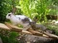 eine Rampe für Kaninchen