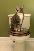 eine Katze geht auf die normale Toilette