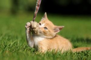 eine kleine Katze spielt auf einer Wiese