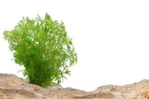 ein Pflanze