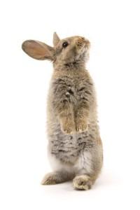 Körpersprache von Kaninchen