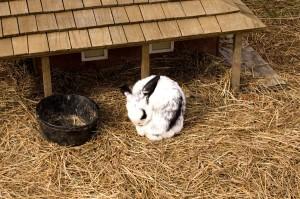 ein Kaninchen im Stroh