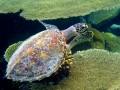 eine Wasserschildkröte