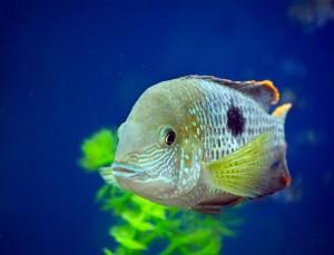 ein kranker Aquariumfisch