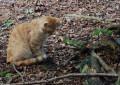 Katze spielt im Wald