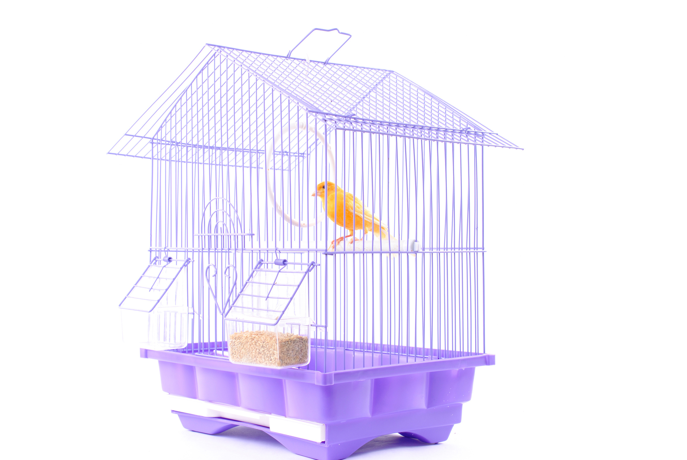 gelber Vogel im Käfig