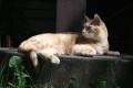 Katze sitzt gemütlich in der Sonne