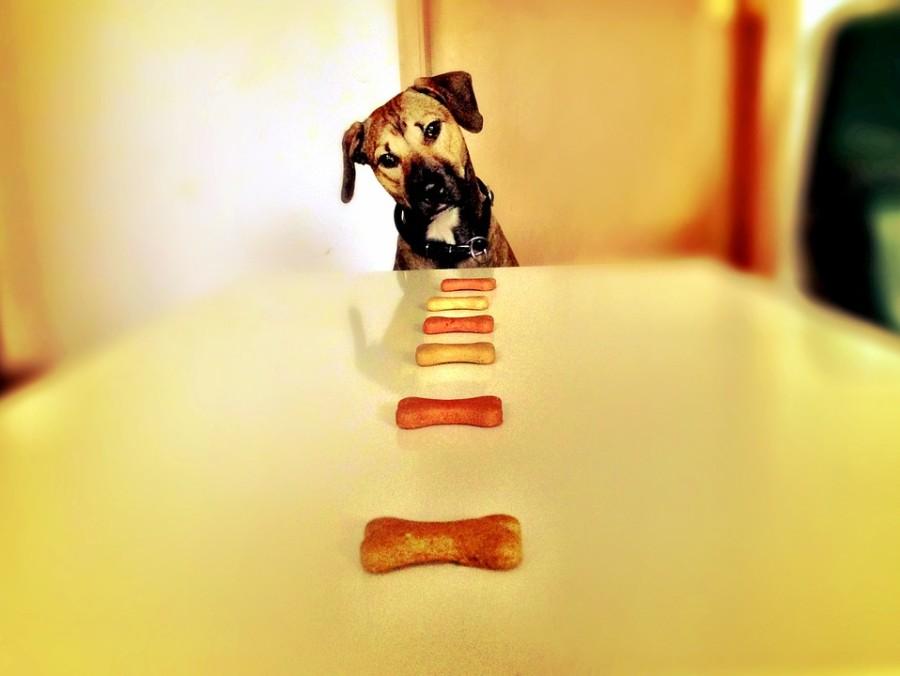 Eine Ernährungsumstellung als Therapie? Mit der BARF-Ernährung sollen Hunde gesund bleiben oder von Erkrankungen geheilt werden. Foto: Nicooo76/pixabay.com