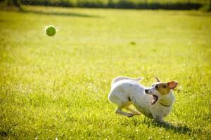 Bewegung und Nahrung sind das A und O für einen gesunden Hund. Foto: /pixabay.com (CC0)