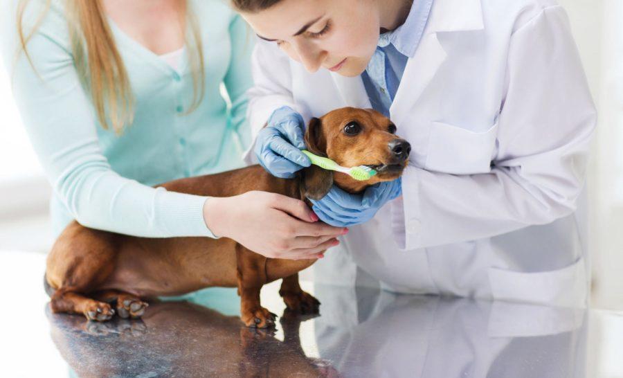 Elektrotherapie auch für Hund und Katzen